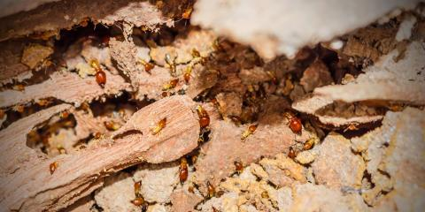 Discover The Basics Of Termite Control Advanced Pest 4 Nearsay