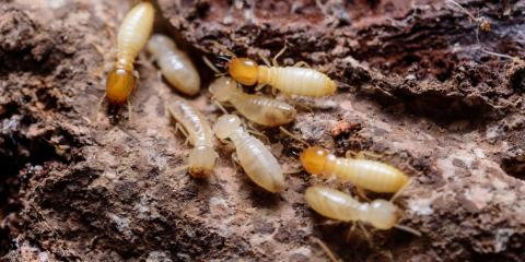 Termite Control Techniques: The Pros & Cons, Murrayville, Georgia