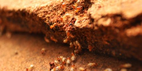 5 Signs You Need a Termite Control Inspection, Reading, Ohio