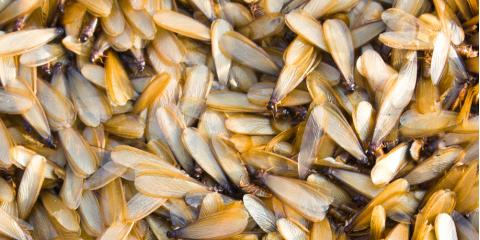 It's Swarm Season: What You Need to Know About Termite Treatments & More, Lexington-Fayette, Kentucky