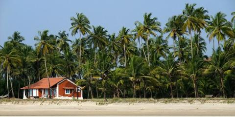 New Home in Honolulu? Get Pre- or Post-Construction Termite Treatments, Honolulu, Hawaii