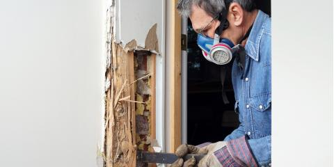 When Should You Call a Termite Specialist?, Wailuku, Hawaii