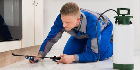 4 Common Signs You Need Professional Pest Control, Honolulu, Hawaii