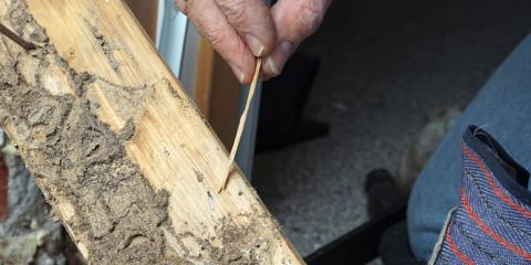 Termite Treatment 101: How Long Do Termites Live?, Hilo, Hawaii