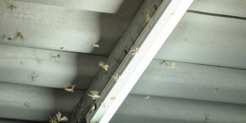 Common Signs of an Infestation , Oxnard, California