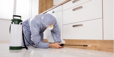 3 Ways to Prepare for a Termite Inspection, Trenton, Ohio