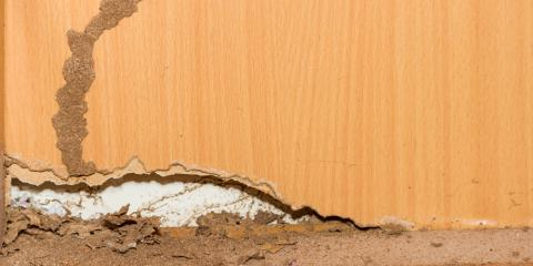 A Termite Lawyer on What You Should Know About Swarms, Dothan, Alabama