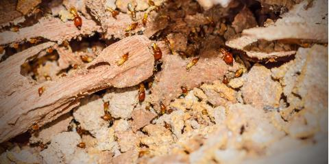 3 Facts You Should Know About Termites, Henderson, Illinois