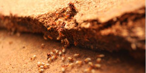 How to Protect Your Home Against Termite Swarms This Spring, Jefferson City, Missouri