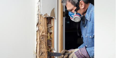 3 Reasons Termites are a Nightmare for Homeowners, Oxnard, California