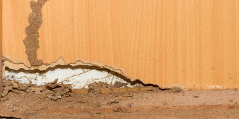 3 Signs of Termites in Your Home, North Hobbs, New Mexico