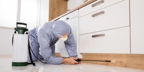 When Should You Schedule an Inspection for Termite Treatment?, Honolulu, Hawaii