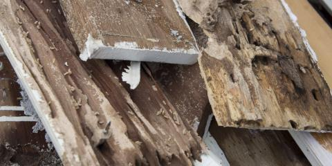 Termite Alert: 5 Signs Your Home May Have an Infestation , Koolaupoko, Hawaii