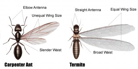 4 FAQ About Termites, Huntington, New York