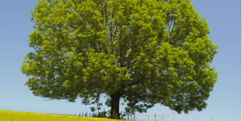 3 FAQs About Ash Borers & How Tree Removal Services Can Help, Henrietta, New York