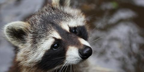 Wildlife Removal: 5 Common Ways Animals Can Enter Your Home, Texarkana, Arkansas