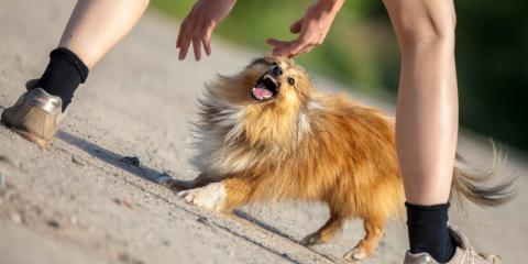 A Guide to Encountering an Aggressive Dog, Texarkana, Texas