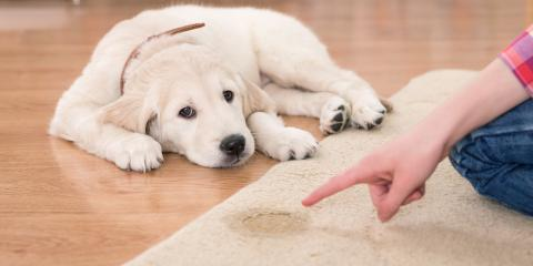 Helpful Tips for Potty Training Your Dog, Texarkana, Texas