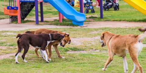 Complimentary Day of Doggy Day Care for New Clients, McKinney, Texas