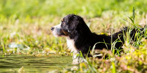 Treatment & Prevention of Leptospirosis in Dogs, San Marcos, Texas