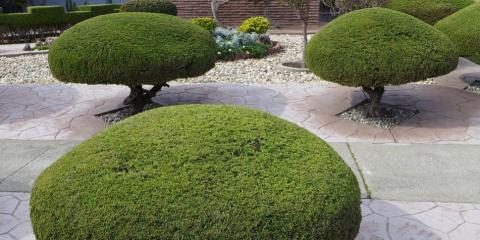Tree Pruning Basics: Here's What To Do (& Not Do), College Station, Texas