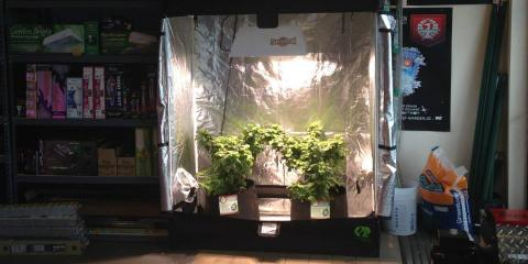 5 Common Hydroponic Systems for Home & Commercial Gardening, Aurora, Colorado