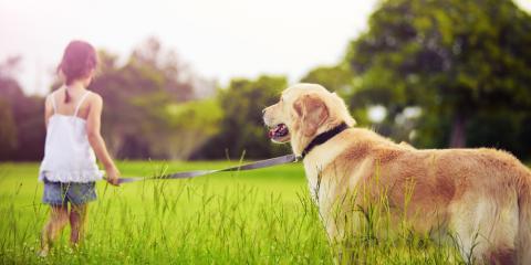3 Ways a Family Pet Will Guide Your Child Through Emotional & Social Development , Parker, Colorado