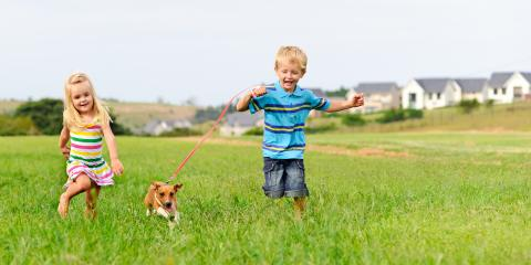 3 Tips for Introducing a New Pet to Your Family, Honolulu, Hawaii