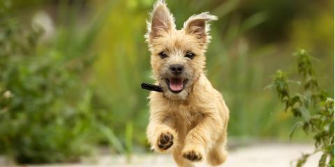 3 Tips for Socializing Puppies, Ewa, Hawaii