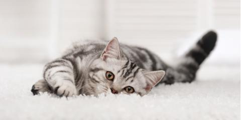 Carpet Cleaning Company Tells 3 Ways to Remove Pet Stains & Odors, Brownstown, Pennsylvania