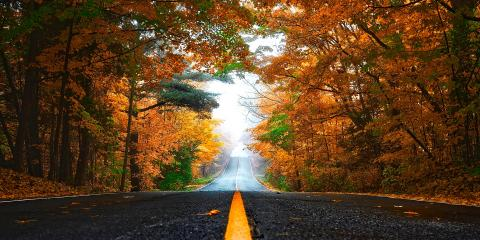 The 6 Dangers of Wet Leaves on the Road, Freehold, New Jersey