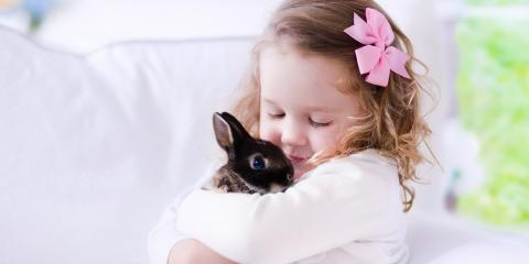 5 Myths & Misconceptions About Rabbit Care, Honolulu, Hawaii