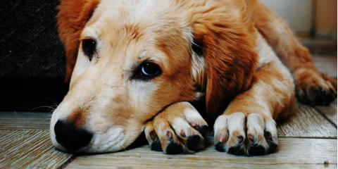 Pet Dermatologists Share 6 Dog Paw Care Tips  , Sharonville, Ohio