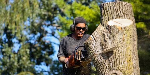 4 Common Symptoms of Diseased Trees, Hopewell, Ohio