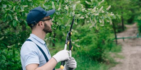 4 Common Ohio Tree Pests, Hopewell, Ohio