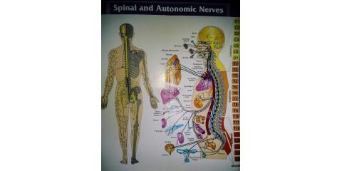 How is Chiropractic different from any other form of health care?, Hay Creek, Minnesota