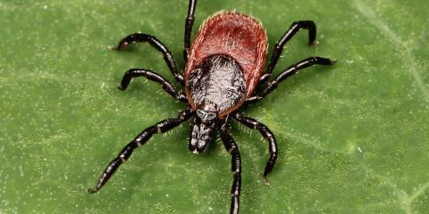 Pet Care Pros Explain the Effects of Lyme Disease & How to Prevent It, Waynesboro, Virginia
