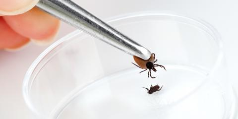 4 Facts You Must Know about Deer Ticks, Hanover, Massachusetts