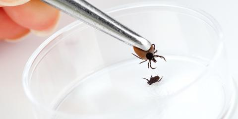 3 Abilities That Make Ticks Such Effective Parasites, Hanover, Massachusetts