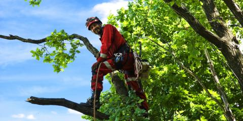 What is an Arborist & Why Might You Need One?, Sparta, Georgia
