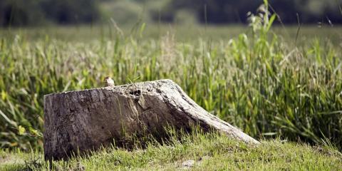 Expert Arborists Share 3 Ways Stump Grinding Will Beautify Your Yard, Sparta, Georgia