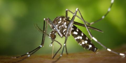 Ditch the Itch: An Exterminator's Take on Managing Mosquitos, Brookhaven, New York