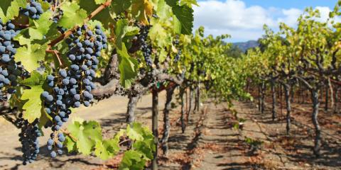 4 Insurance Options to Consider for a Winery, Andalusia, Alabama