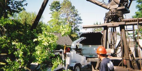 Todd's Tip Top Complete Tree Service, Tree & Stump Removal, Services, Rhinelander, Wisconsin