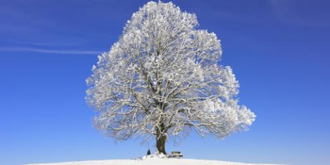 3 Tree Care Tricks to Try After a Winter Storm, Macedon, New York