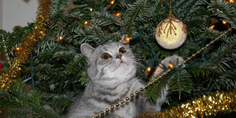 Holiday Pet Wellness 101: Advice From TLC Pet Care Centers, Springfield, Ohio