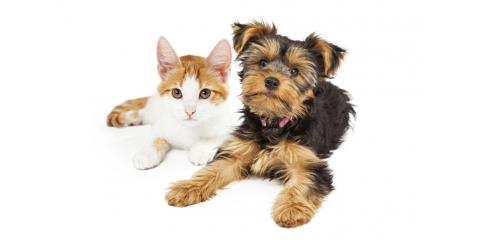 10% off Spaying and Neutering This Month Only!, Springfield, Ohio