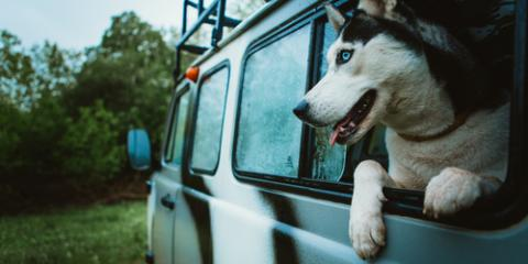 Pigeon Forge's Lodging Company Shares 3 Reasons to Bring Your Dog on Vacation, Gatlinburg, Tennessee