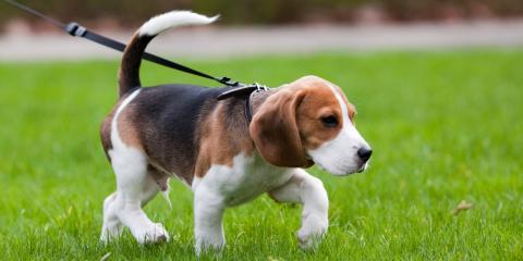 How to Find a Reputable Dog-Walking Company, Easton, Connecticut