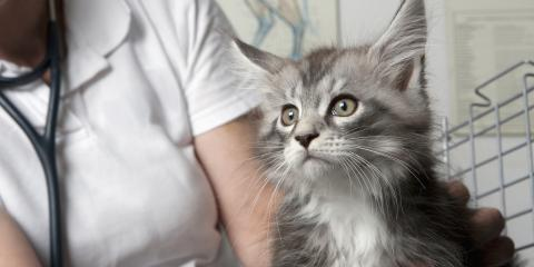 Top 3 Features to Look For in a Pet Clinic, Mount Washington, Kentucky